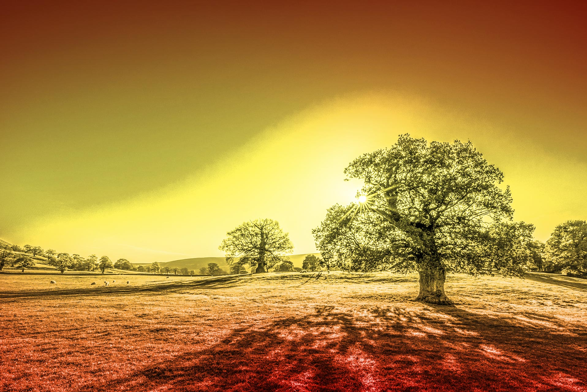Countryside Trees