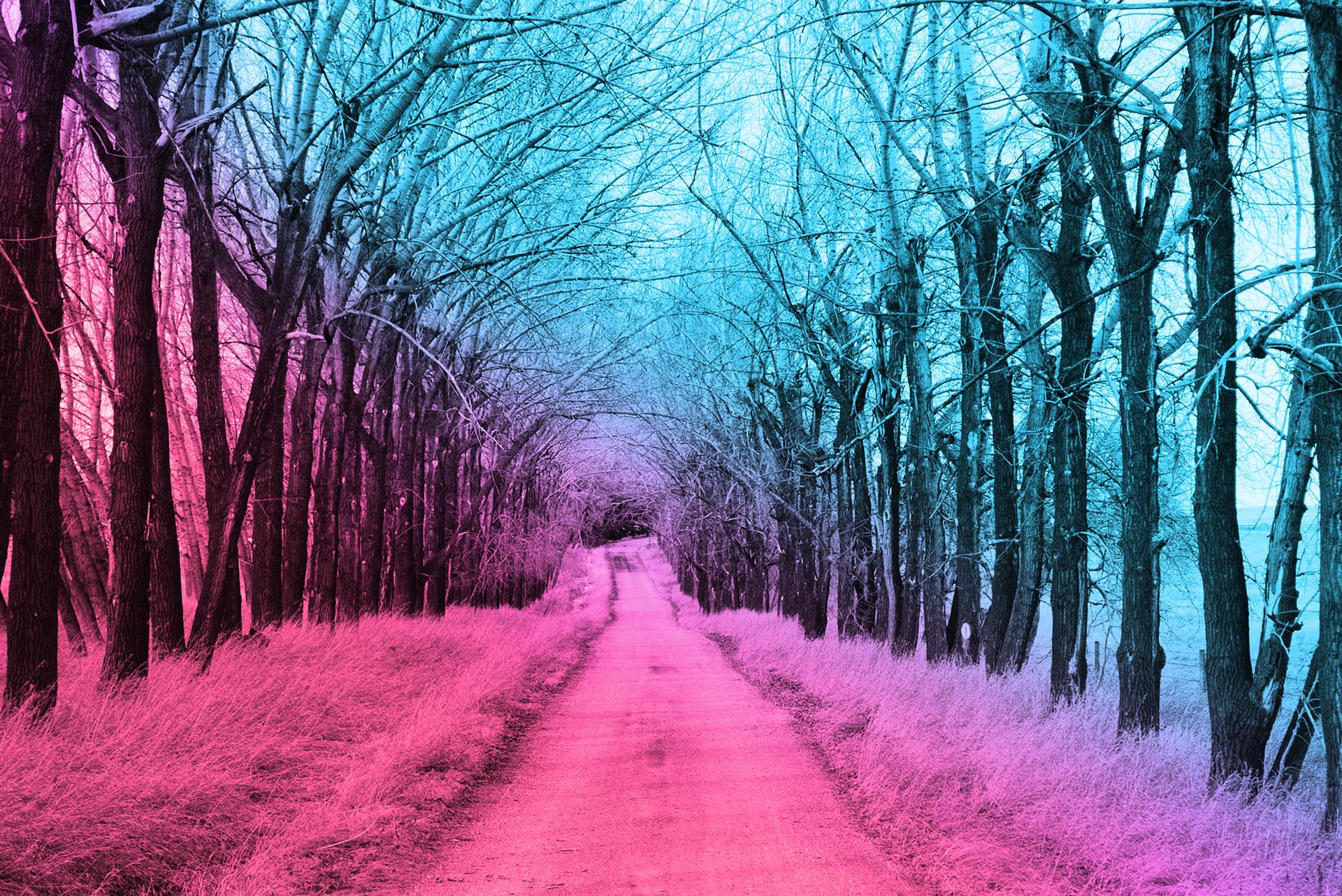 Countryside Tree Path